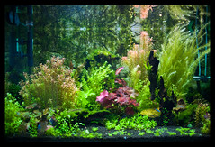 Tank #2 at 24mm f/1.4 (terencehonin) Tags: plant green water aquarium nikon tank fresh 24mm nikkor planted afsnikkor24mmf14ged