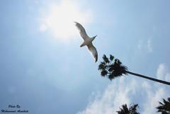 Pretty Bird Flying in The Sky Sky Tree Bird Fly Flying