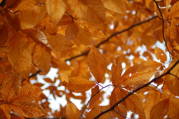 leaves12