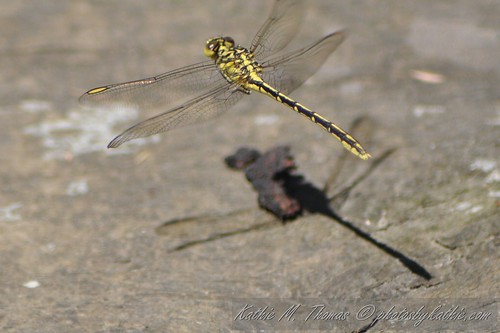 Yellow Dragonfly hovering