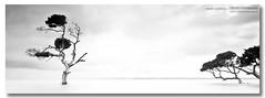 More Trees and More Water ([ Kane ]) Tags: longexposure trees sky blackandwhite bw seascape black tree water canon dark landscape island qld queensland bayside kane tones 1740 6x17 moretonbay gledhill kanegledhill 5dmarkii wwwhumanhabitscomau
