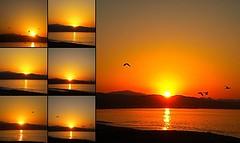 vuelo en el amanecer (nenazur) Tags: libertad mar amanecer