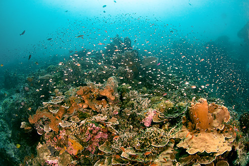 Underwater Moyo....