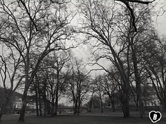 IN THE PARK IN WINTER #park #winter #january #kurpark #bridge #Brücke #schwarzweiß #blackandwhite #Photographie #photography (benicturesblackwhite) Tags: blackandwhite park bridge photography brücke schwarzweis january photographie kurpark winter