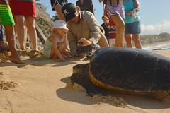 Face to face with a sea turtle (radargeek) Tags: isleofmaui maui hawaii hookipabeachpark beach child kid shootingtheshooter seaturtle