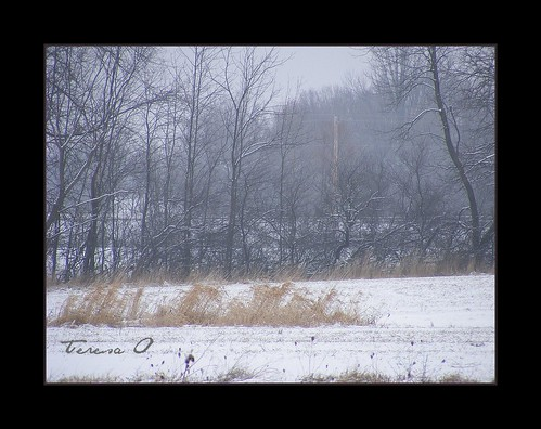 Cold December Morn
