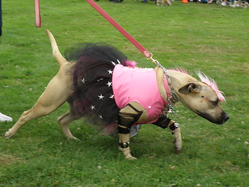 Best Dressed Dog at Paul Bunyan Days Ugly Dog Contest