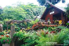 Doi Tung coffee shop (Pkamo@Tai) Tags: trip travel flowers green nature beautiful garden thailand design tour place visit thai 2009 chiangrai puykamo impressedbeauty    maefahluanggarden     greatplacefortravel