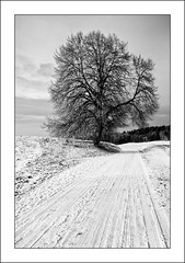 On a winter day (*Glueckskind*) Tags: schnee winter blackandwhite bw snow tree germany landscape deutschland december felder spuren dezember schwarzweiss wintertag landschaft baum weg spaziergang winterday canon40d platinumheartaward