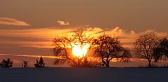 golden sun (diwan) Tags: schnee trees winter sun snow silhouette clouds canon germany geotagged deutschland eos sonnenuntergang place sundown wolken sonne baum 2010 brde saxonyanhalt sachsenanhalt sohlen canoneos450d slzetal geo:lon=11649719 geo:lat=52051324