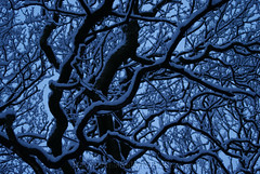Snowy Branches (nuttynat84) Tags: snow nature night snowy branches sony reserve bank a200 foxhill snowybranches sonya200 foxhillbanknaturereserve
