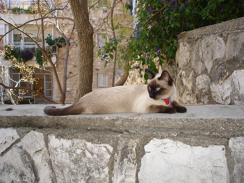 Catschka on the stone fence