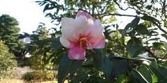 http://farm5.static.flickr.com/4052/4265354075_3bf9c1e8c3_m.jpg