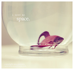 . i need my space . (* Ana.Guerrero *) Tags: stilllife fish canon 50mm bowl beta explore legacy 40d