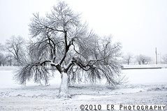 That Tree (Assassin Photography) Tags: winter snow fog contrast frozen nikon d70 riversidepark arkansasriver wichitakansas thattree assassinphotography erphotography