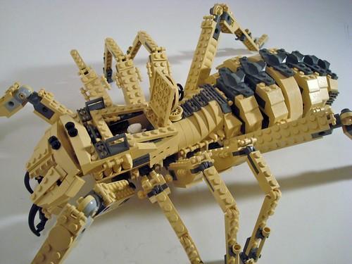 Camel Spider...... Giant Camel Spider Size