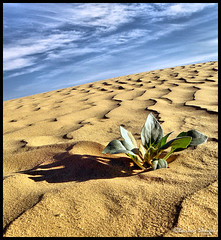 In the Beginning ! (Bashar Shglila) Tags: world show sky green sahara rose clouds photography gallery alone desert photos top space go best most worlds must popular libya libyen lbia topseven libi libiya awbari liviya libija      lbija  lby libja lbya liiba livi