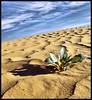 In the Beginning ! (Bashar Shglila) Tags: world show sky green sahara rose clouds photography gallery alone desert photos top space go best most worlds must popular libya libyen líbia topseven libië libiya awbari liviya libija либия توارق ливия լիբիա ลิเบีย lībija либија lìbǐyà libja líbya liibüa livýi λιβύη לוב ايموهاغ هقار
