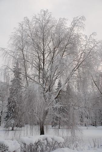 Jan 2009, Tallinn, Kadriorg