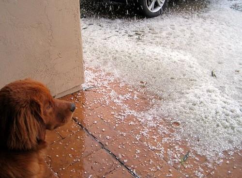 whoa hail