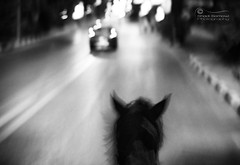 Your Wildest Dreams.. (SonOfJordan) Tags: road street original light shadow wild blackandwhite bw horse motion blur car speed canon eos lights blackwhite cool scary movement blurry mood noiretblanc action bokeh grain dream egypt chase concept grainy conceptual xsi 450d samawi epiceditsselection sonofjordan wwwshadisamawicom neverstopchasingyourwildestdreams