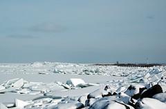 310110 ijmeer- en oostvaardersdijk (9) (rspeur) Tags: winter thenetherlands lelystad oostvaardersdijk