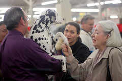 Golden Gate Kennel Club Dog Show: Pressing the flesh