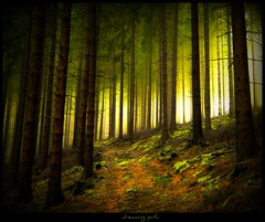 Waldweg - dreaming path (NPPhotographie) Tags: wood mist tree art nature fog forest germany way path magic creative dreaming fairy dust magical oberberg mystic platinumphoto colorphotoaward theunforgettablepictures yourwonderland bestofmywinners