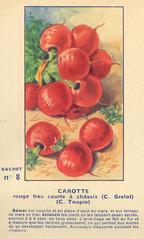 legume8 carotte