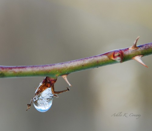 Ice in the waterdrop