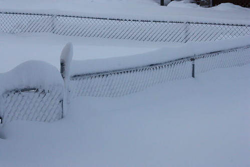 Our 4' tall fence
