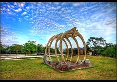 Singapore Yishun : bottle tree park: (Kenny Teo (zoompict)) Tags: light sunset sky cloud art tourism beautiful sunrise canon wonderful landscape scenery photographer view walk dramatic tourist kenny zoompict singaporelowerpiercereservoir