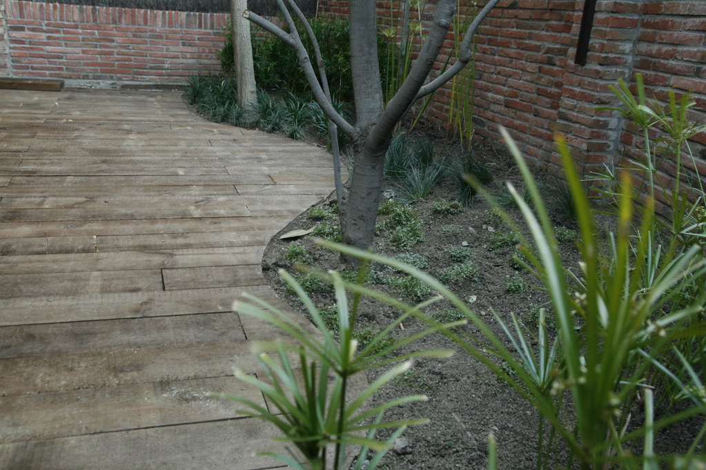 jardn en esplugues de llobregat jardinitis tags papyrus pavimento paisajismo jardinitis