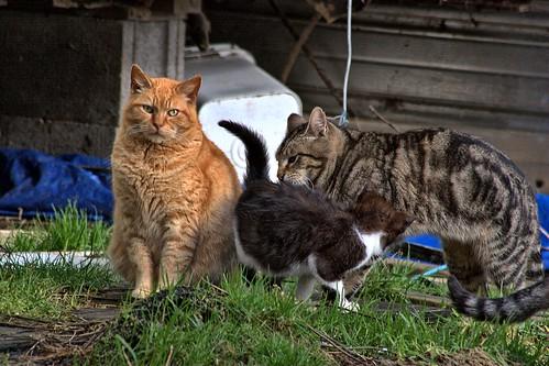 Three Random Feral Cats photo pic