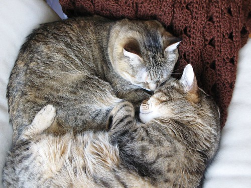snuggling2