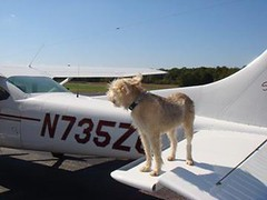 Dog standing on the wing of an airplane
