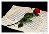 1923 (Juan Miguel) Tags: music stilllife flower rose sony flor rosa bodegón música partitura alpha700 ostrellina konicaminolta2875