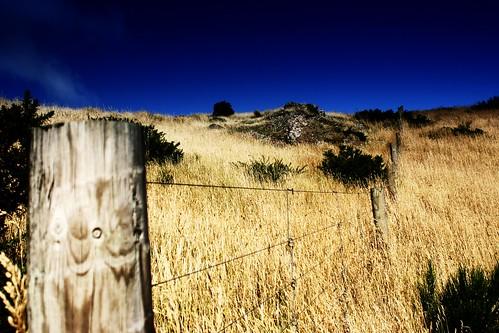 lyttelton fences