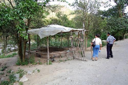 Gallera Chiquitica en Los Cacaos