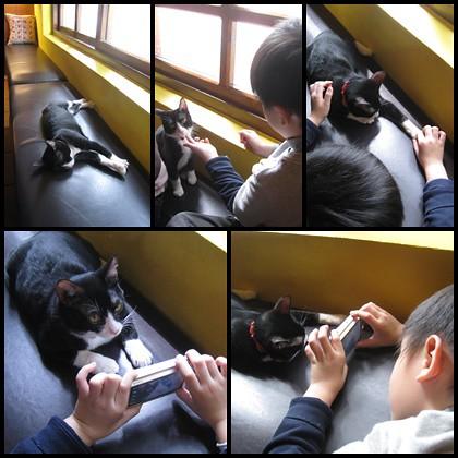 Alleycat's cat