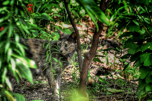 Cat in grassy place HDR
