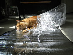 Sun Bathing (JonJCP) Tags: sun animal cat feline churro