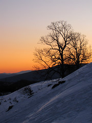 Evening Silhouettes (BlueRidgeKitties) Tags: winter sunset mountain mountains tree landscape march northcarolina landschaft blueridgemountains blueridgeparkway appalachianmountains appalachians westernnorthcarolina southernappalachians ccbyncsa moseshconememorialpark canonpowershotsx10is
