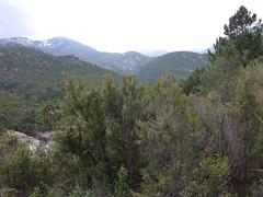 Sentier du ruisseau de Sainte-Lucie : neiges vers le N des bergeries de Luviu