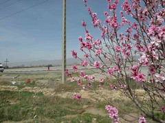 Spring Breeze from Iran / 2010:03:15 13:22:41 Photo