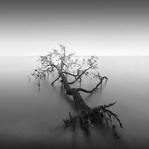 * tree IV *