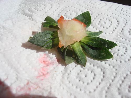 Erdbeere gegessen