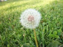 Wish (noahakumu) Tags: trees flower green leaves pretty wishingflower altalomapark