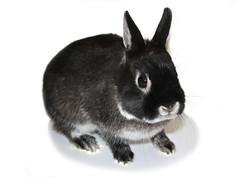 Blacky le lapin (R_Dumont) Tags: chien pet rabbit animal de toy chat animaux poil lapin boule rongeur