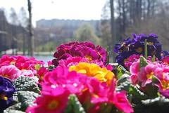 Rand de flori